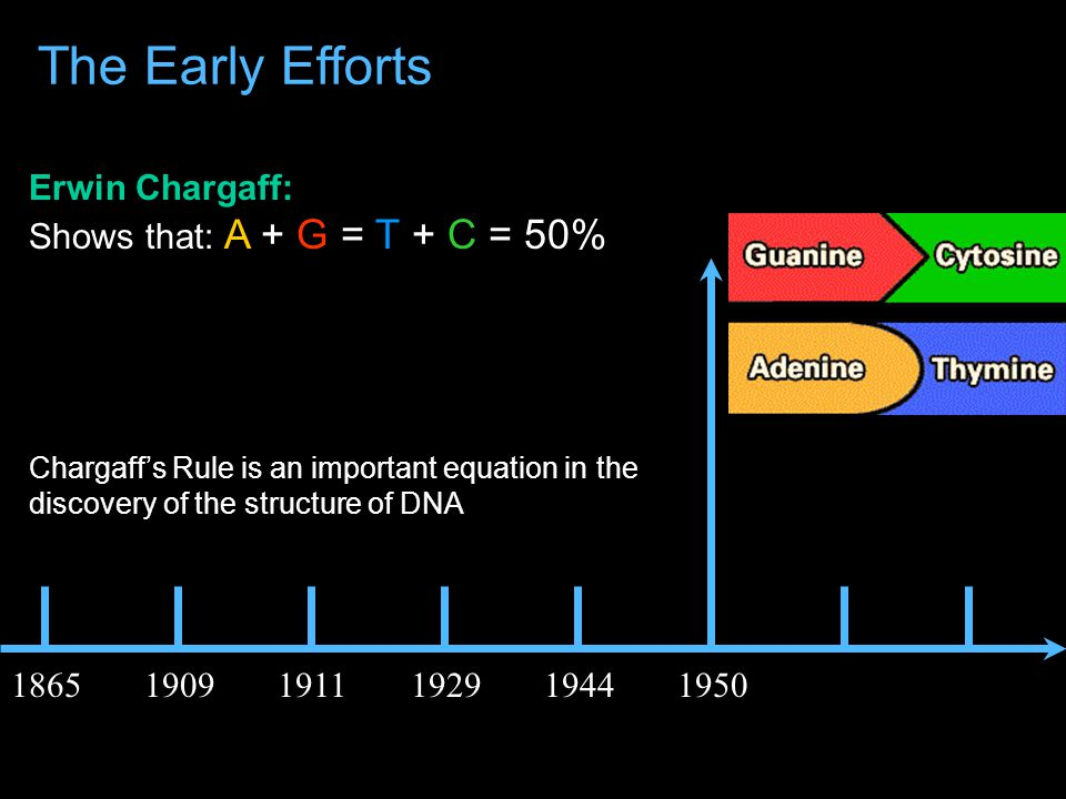 Oswald Avery: Shows that DNA can transform the property of cells 186519091911192919441950 The Early Efforts However, this idea was not universally accepted