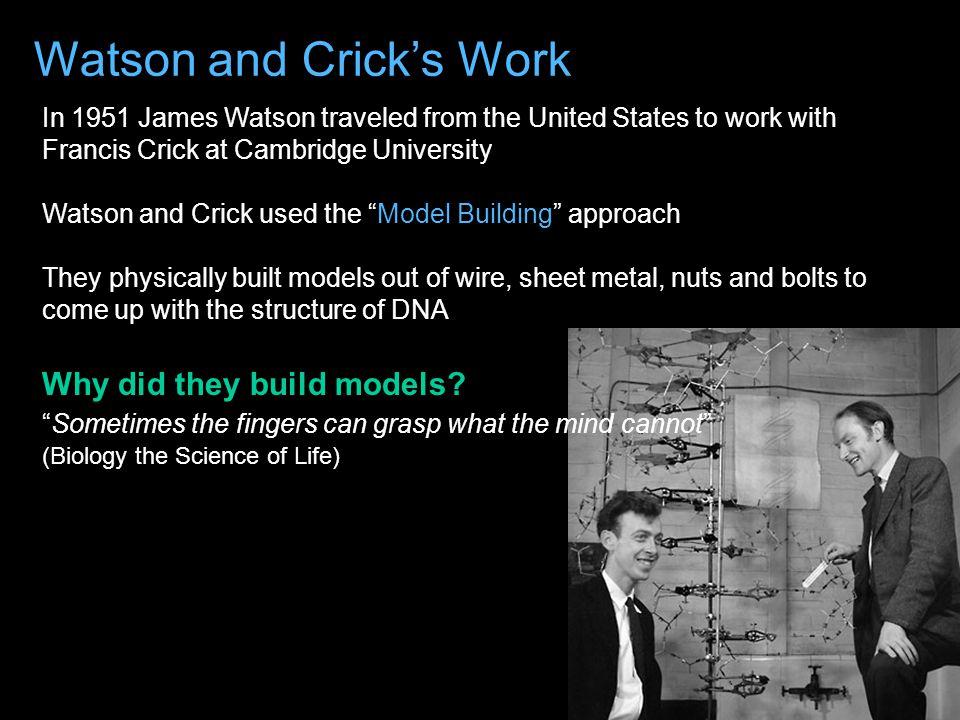 Watson and Crick's Work