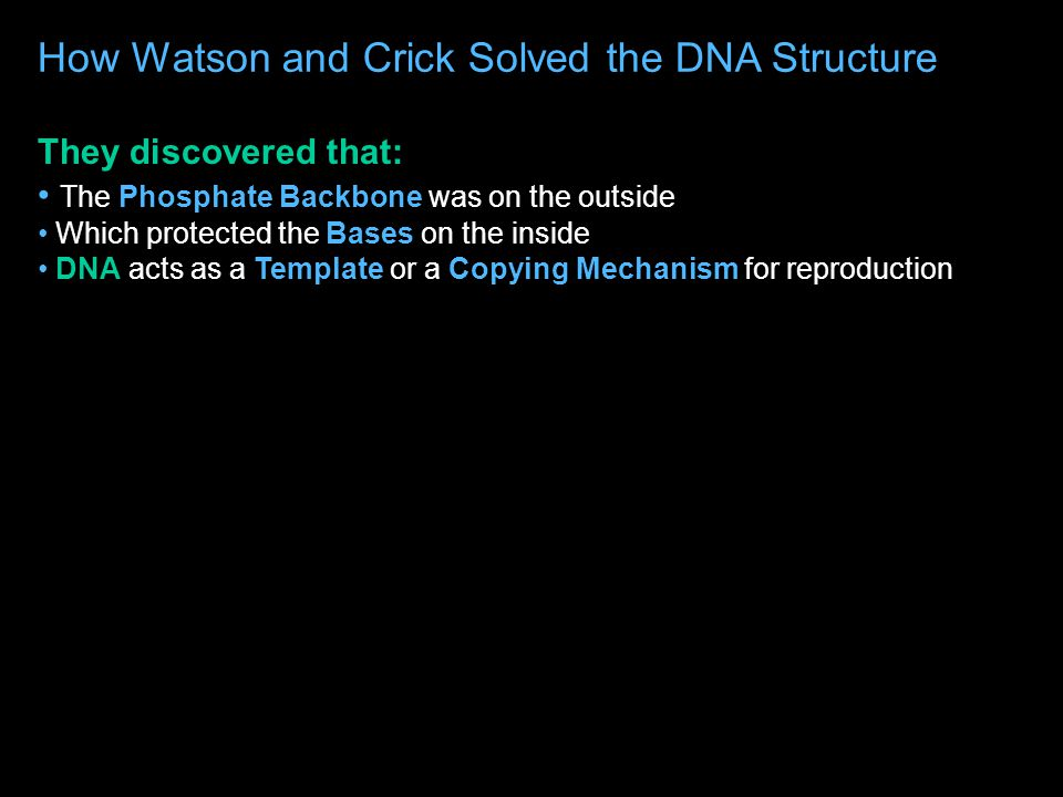 How Watson and Crick Solved the DNA Structure They already knew from Franklin and Wilkins' work that DNA was in the form of a Double Helix They used Chargaff's Rule to figure out how the 4 Bases match up in pairs Photo 51