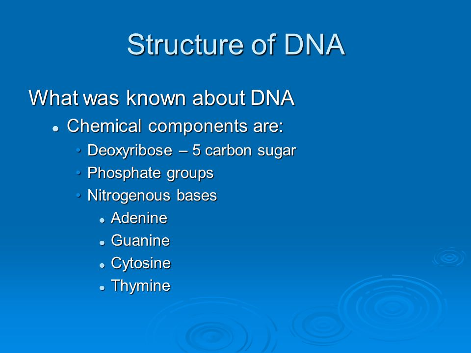 Structure of DNA What was known about DNA Chemical components are: Chemical components are: Deoxyribose – 5 carbon sugarDeoxyribose – 5 carbon sugar P