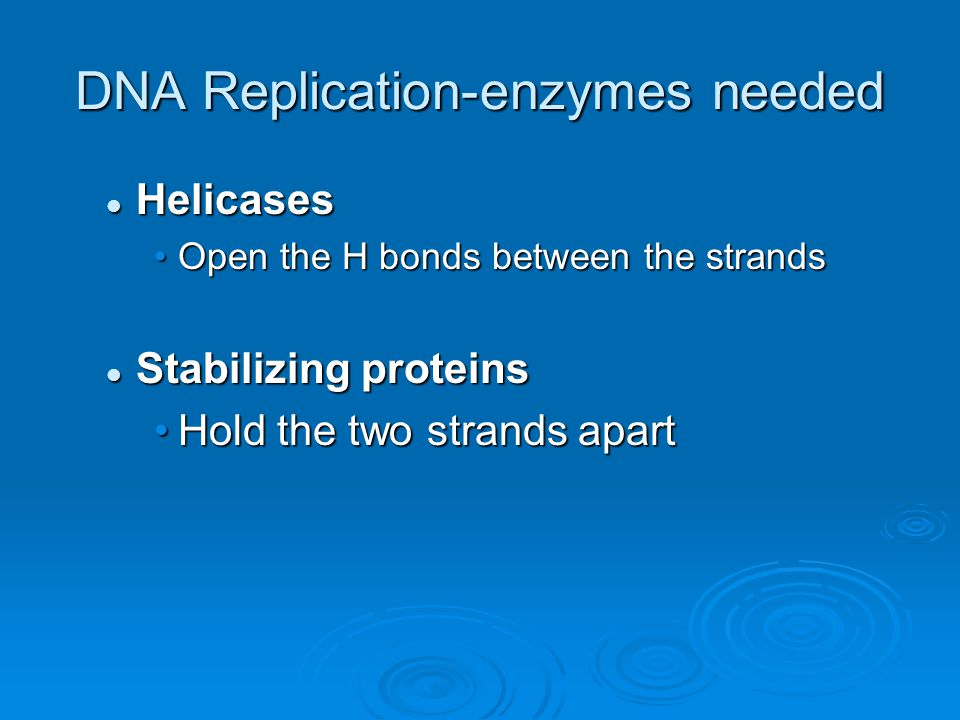 DNA Replication-enzymes needed Helicases Helicases Open the H bonds between the strandsOpen the H bonds between the strands Stabilizing proteins Stabilizing proteins Hold the two strands apartHold the two strands apart