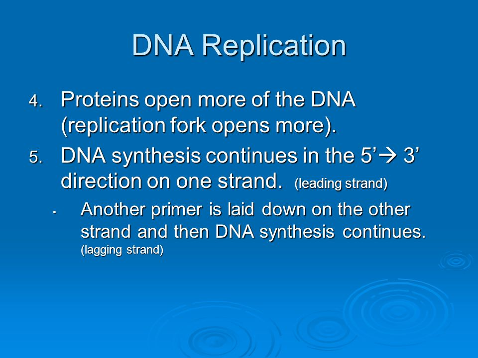 DNA Replication 4. Proteins open more of the DNA (replication fork opens more). 5. DNA synthesis continues in the 5'  3' direction on one strand. (le