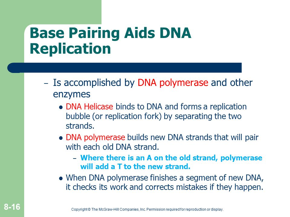Copyright © The McGraw-Hill Companies, Inc. Permission required for reproduction or display. 8-16 Base Pairing Aids DNA Replication – Is accomplished