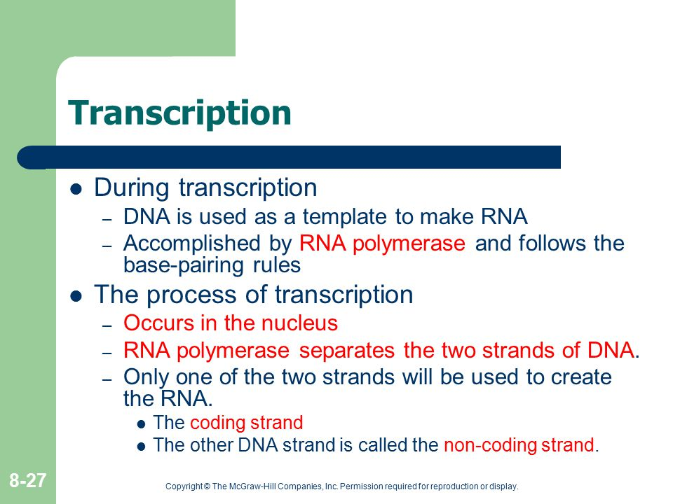 Copyright © The McGraw-Hill Companies, Inc. Permission required for reproduction or display. 8-27 Transcription During transcription – DNA is used as