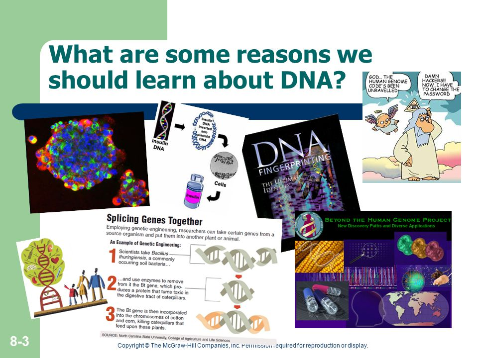 What are some reasons we should learn about DNA? Copyright © The McGraw-Hill Companies, Inc. Permission required for reproduction or display. 8-3