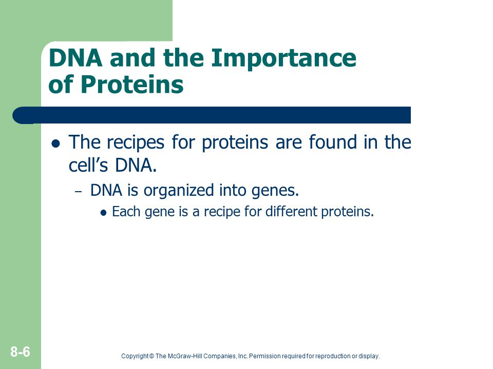 Copyright © The McGraw-Hill Companies, Inc. Permission required for reproduction or display. 8-6 DNA and the Importance of Proteins The recipes for pr