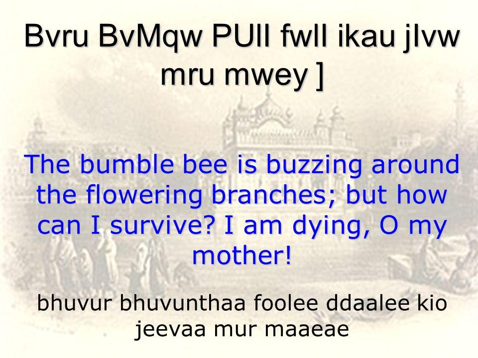 bhuvur bhuvunthaa foolee ddaalee kio jeevaa mur maaeae Bvru BvMqw PUlI fwlI ikau jIvw mru mwey ] The bumble bee is buzzing around the flowering branches; but how can I survive.