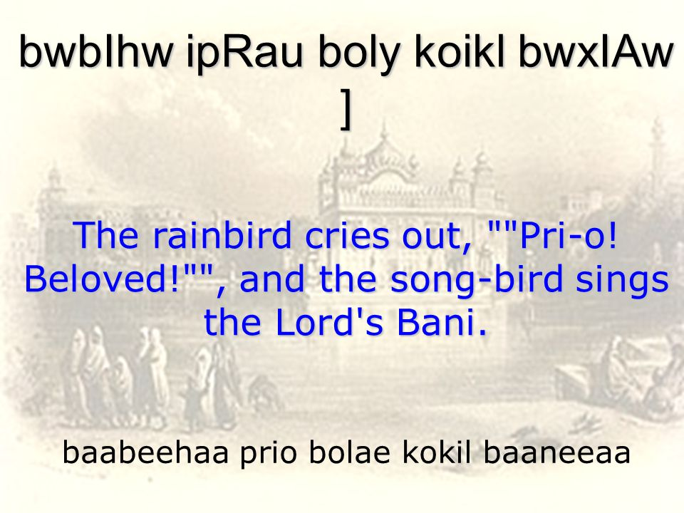 baabeehaa prio bolae kokil baaneeaa bwbIhw ipRau boly koikl bwxIAw ] The rainbird cries out, Pri-o.