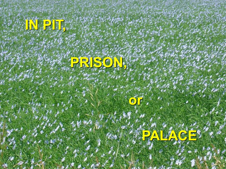 IN PIT, PRISON, PALACE or
