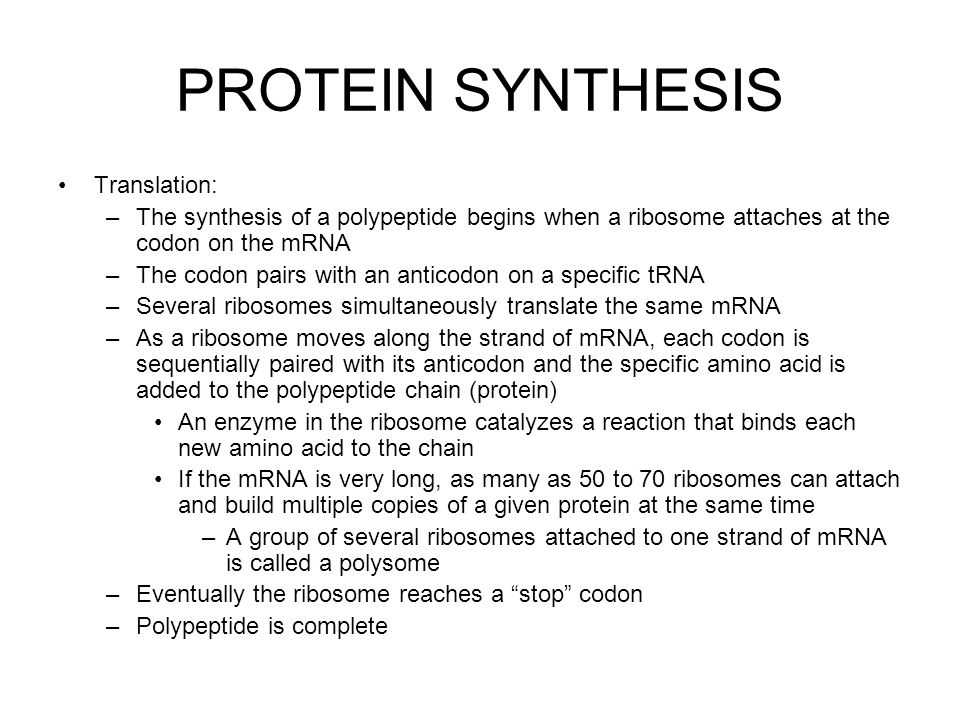 PROTEIN SYNTHESIS Translation: –The synthesis of a polypeptide begins when a ribosome attaches at the codon on the mRNA –The codon pairs with an anticodon on a specific tRNA –Several ribosomes simultaneously translate the same mRNA –As a ribosome moves along the strand of mRNA, each codon is sequentially paired with its anticodon and the specific amino acid is added to the polypeptide chain (protein) An enzyme in the ribosome catalyzes a reaction that binds each new amino acid to the chain If the mRNA is very long, as many as 50 to 70 ribosomes can attach and build multiple copies of a given protein at the same time –A group of several ribosomes attached to one strand of mRNA is called a polysome –Eventually the ribosome reaches a stop codon –Polypeptide is complete