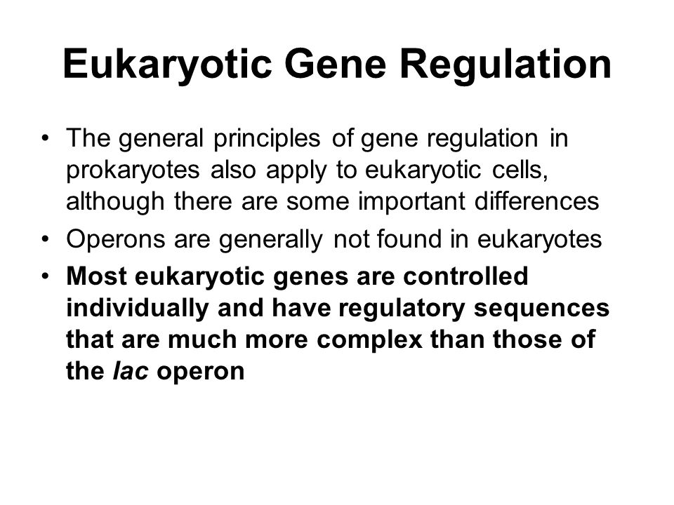 Eukaryotic Gene Regulation The general principles of gene regulation in prokaryotes also apply to eukaryotic cells, although there are some important differences Operons are generally not found in eukaryotes Most eukaryotic genes are controlled individually and have regulatory sequences that are much more complex than those of the lac operon