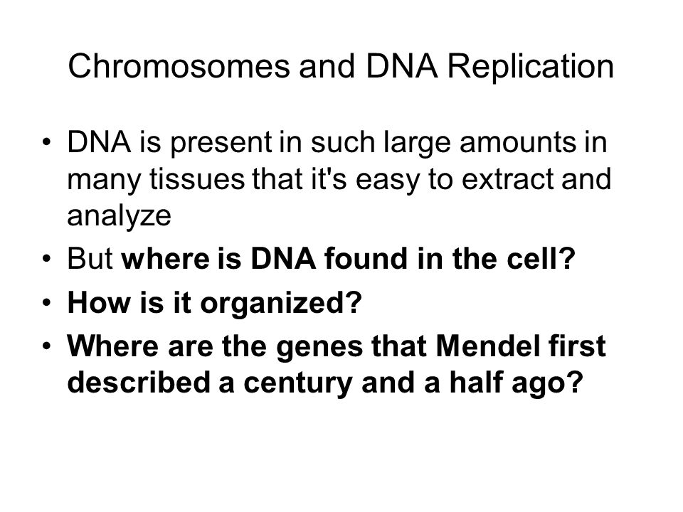 Chromosomes and DNA Replication DNA is present in such large amounts in many tissues that it s easy to extract and analyze But where is DNA found in the cell.