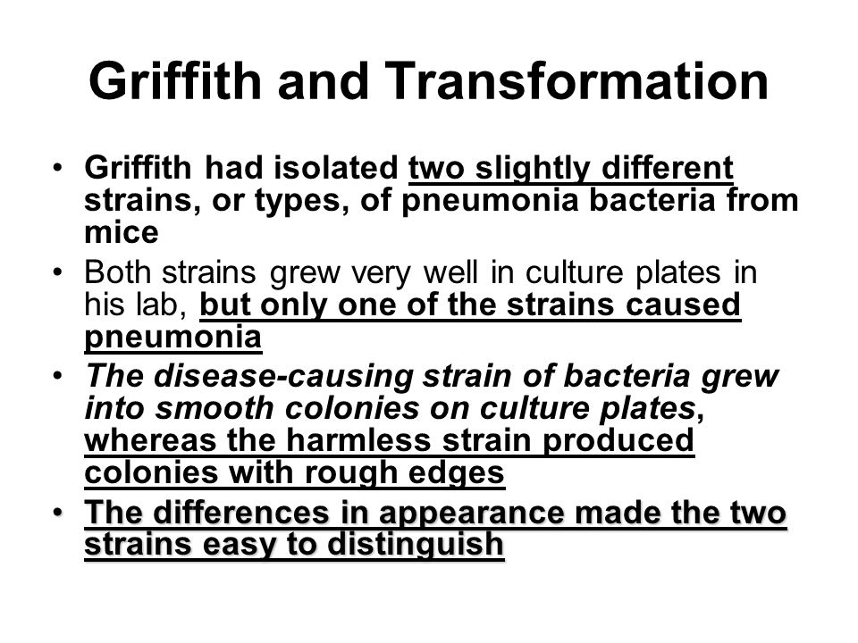 Griffith and Transformation Griffith had isolated two slightly different strains, or types, of pneumonia bacteria from mice Both strains grew very well in culture plates in his lab, but only one of the strains caused pneumonia The disease-causing strain of bacteria grew into smooth colonies on culture plates, whereas the harmless strain produced colonies with rough edges The differences in appearance made the two strains easy to distinguishThe differences in appearance made the two strains easy to distinguish