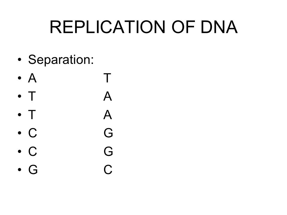 REPLICATION OF DNA Separation: AT TA CG GC