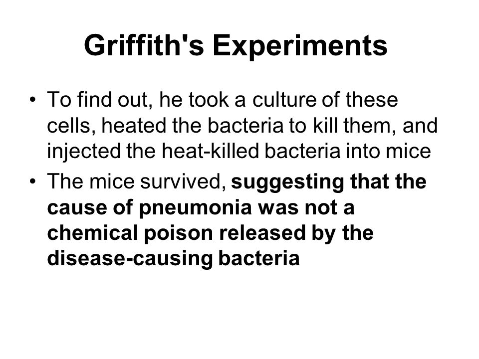 Griffith s Experiments To find out, he took a culture of these cells, heated the bacteria to kill them, and injected the heat-killed bacteria into mice The mice survived, suggesting that the cause of pneumonia was not a chemical poison released by the disease-causing bacteria