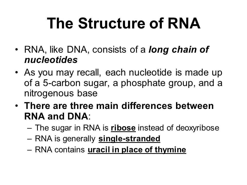 The Structure of RNA RNA, like DNA, consists of a long chain of nucleotides As you may recall, each nucleotide is made up of a 5-carbon sugar, a phosphate group, and a nitrogenous base There are three main differences between RNA and DNA: –The sugar in RNA is ribose instead of deoxyribose –RNA is generally single-stranded –RNA contains uracil in place of thymine