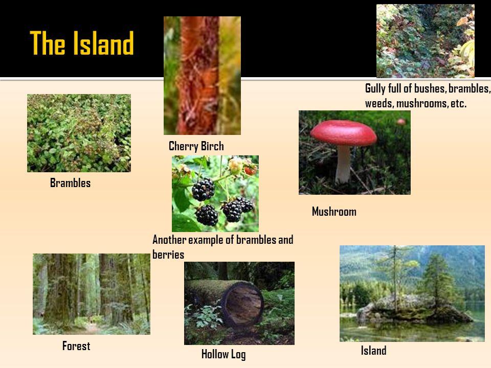 Mushroom Island Hollow Log Forest Cherry Birch Brambles Gully full of bushes, brambles, weeds, mushrooms, etc.