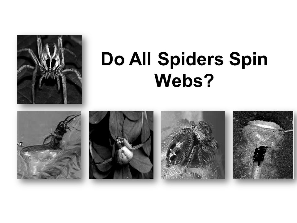 10 Any of these words could be used to describe the spiders in the selection.