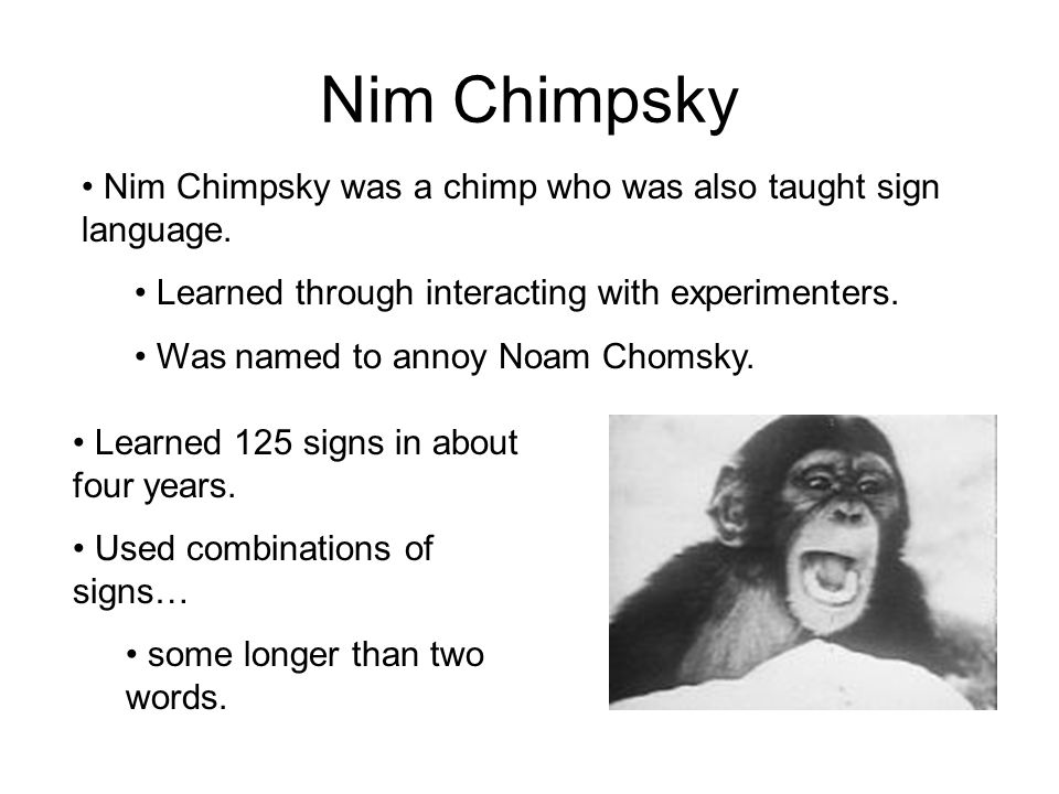 Nim Chimpsky Nim Chimpsky was a chimp who was also taught sign language. Learned through interacting with experimenters. Was named to annoy Noam Choms