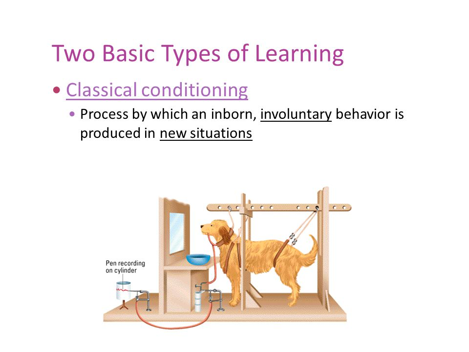 Two Basic Types of Learning Operant conditioning Strengthening or weakening of a voluntary behavior because of its consequences Behavior (dog sits) Scolding Praise Nothing Behavior Increases or decreases Food Reinforcers