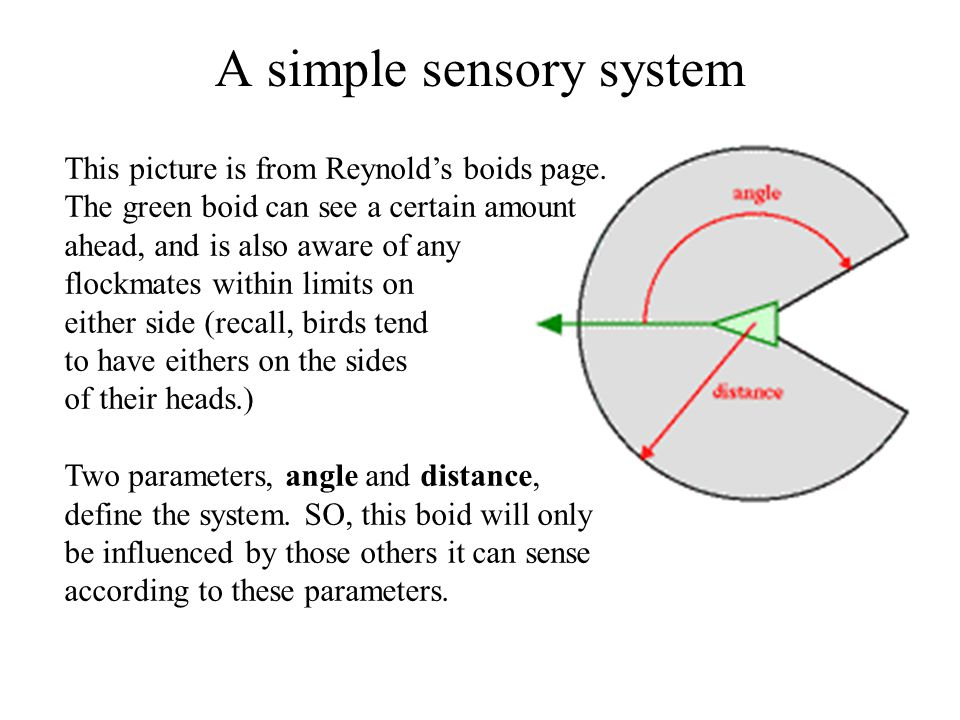 A simple sensory system This picture is from Reynold's boids page.