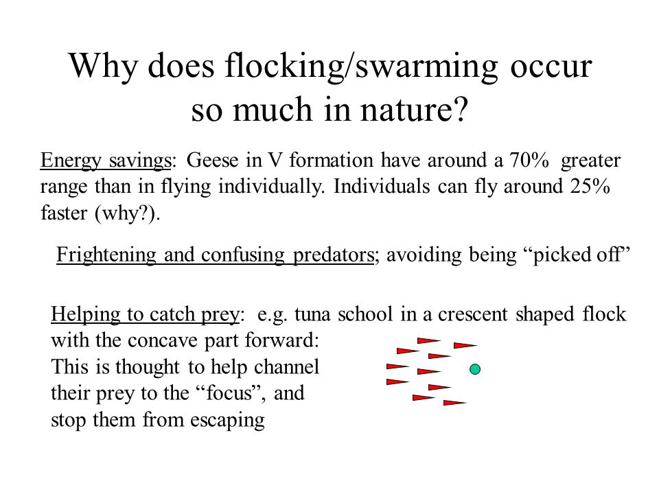Why does flocking/swarming occur so much in nature.