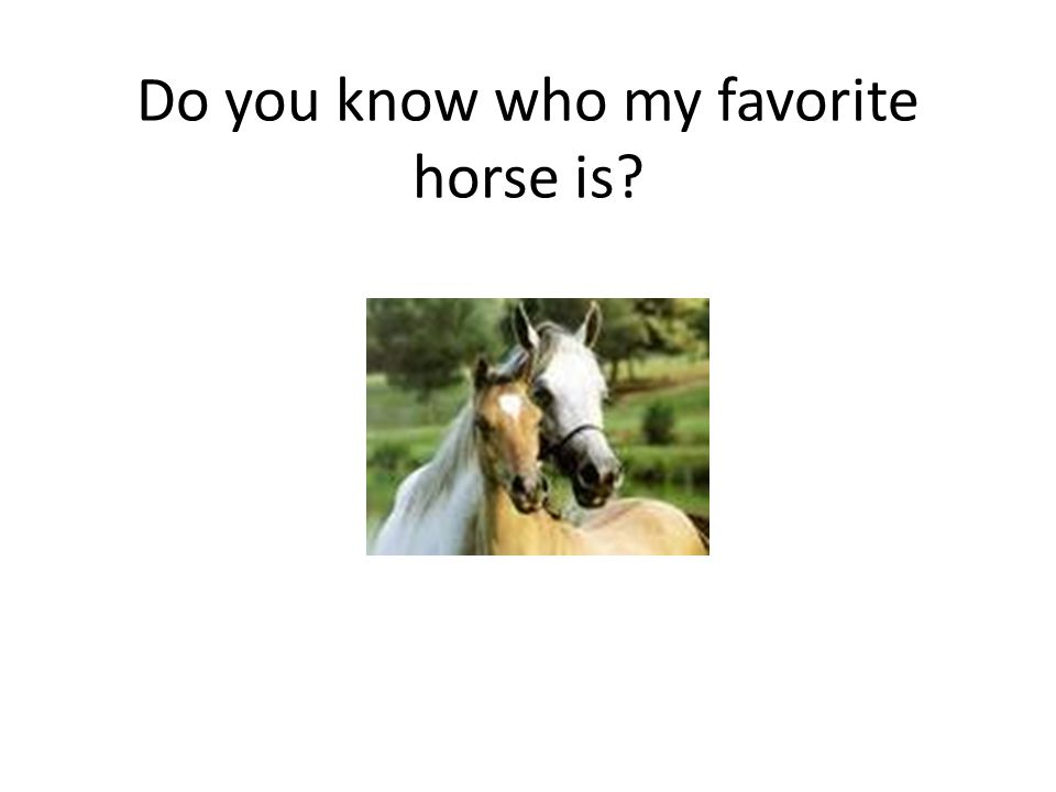 Do you know who my favorite horse is