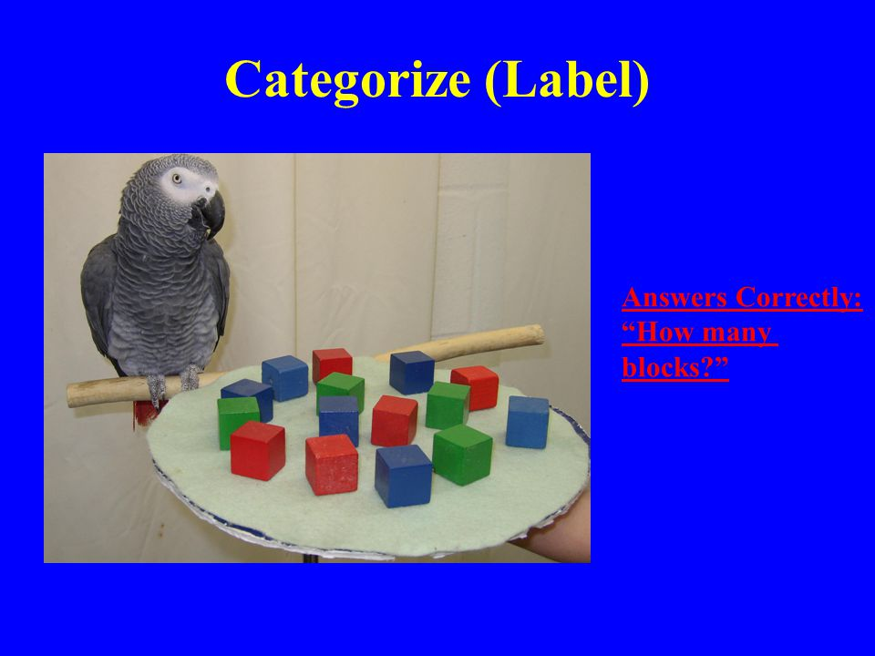 Categorize (Label) Answers Correctly: How many blocks?
