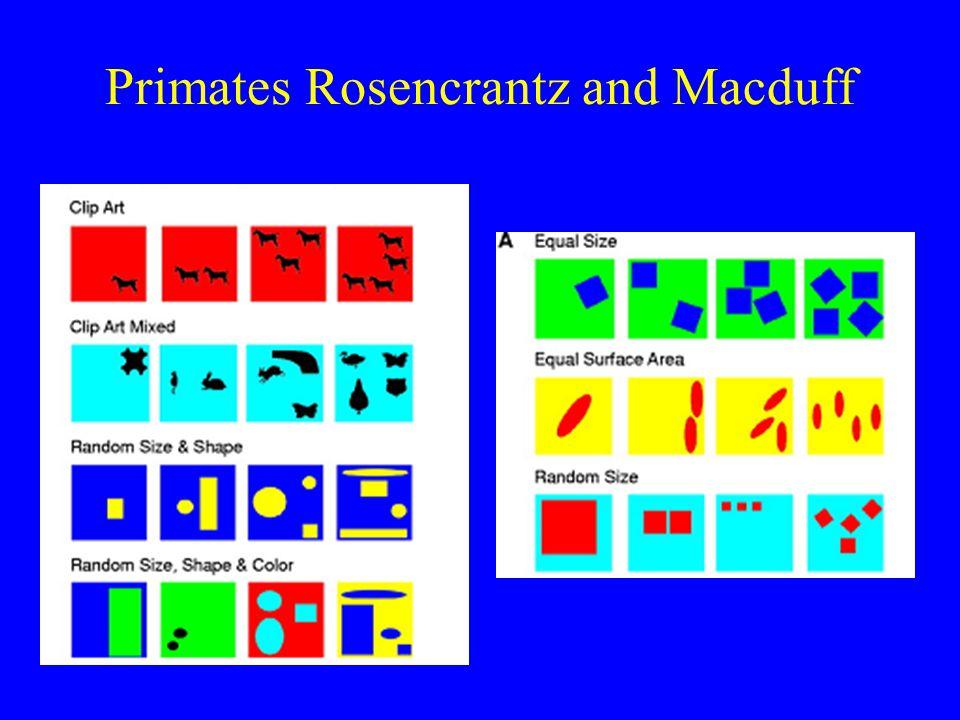 Primates Rosencrantz and Macduff