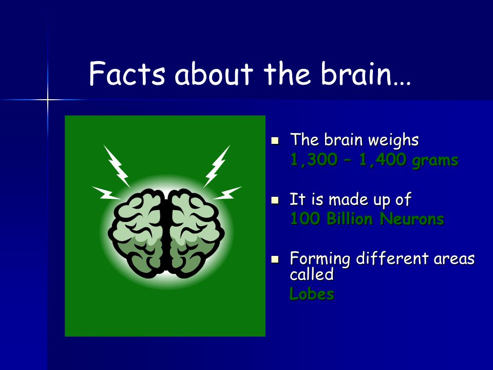 The brain weighs 1,300 – 1,400 grams It is made up of 100 Billion Neurons Forming different areas called Lobes Facts about the brain…
