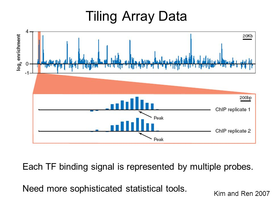 Tiling Array Data Each TF binding signal is represented by multiple probes. Need more sophisticated statistical tools. Kim and Ren 2007