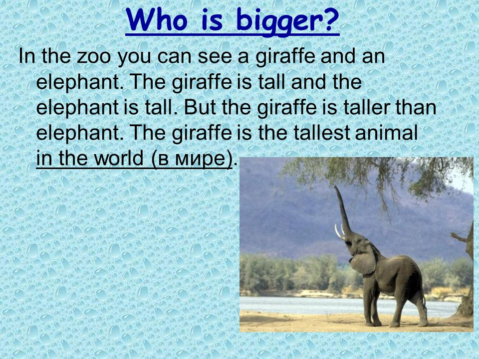 Who is bigger? In the zoo you can see a giraffe and an elephant. The giraffe is tall and the elephant is tall. But the giraffe is taller than elephant