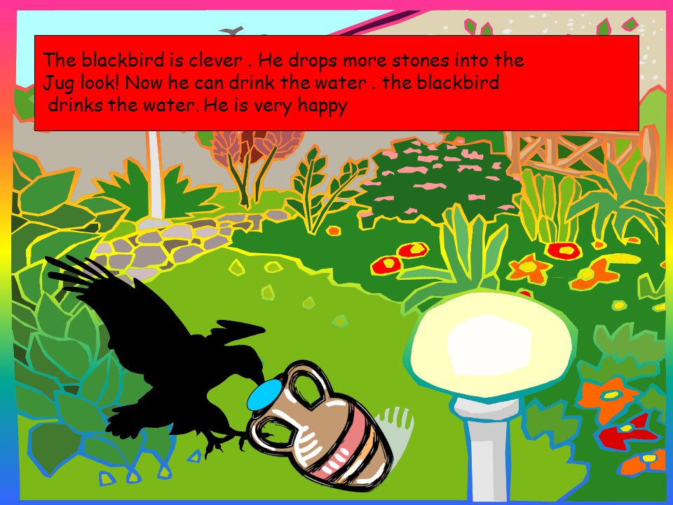 The blackbird is clever. He drops more stones into the Jug look! Now he can drink the water. the blackbird drinks the water. He is very happy