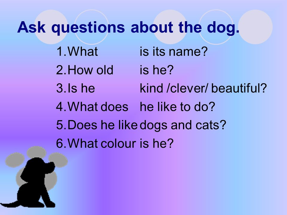 Ask questions about the dog.
