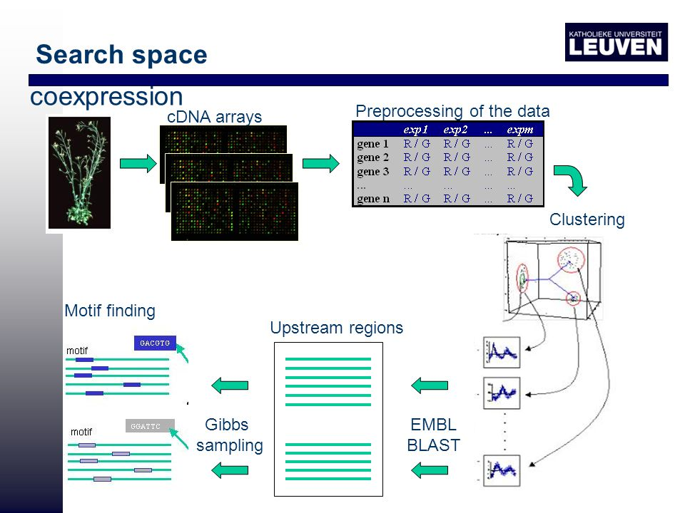 coexpression cDNA arrays Motif finding Clustering Preprocessing of the data EMBL BLAST Upstream regions Gibbs sampling Search space
