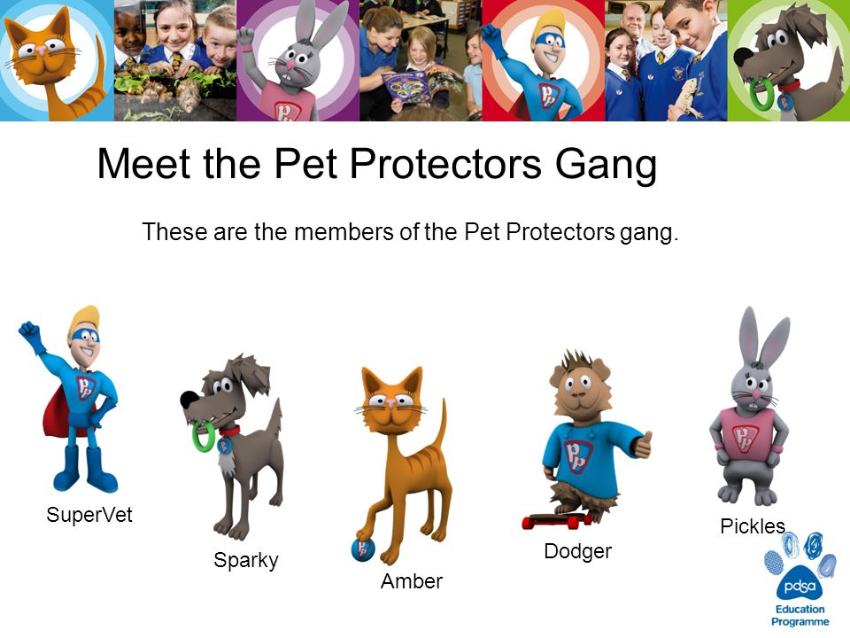 Meet the Pet Protectors Gang These are the members of the Pet Protectors gang.