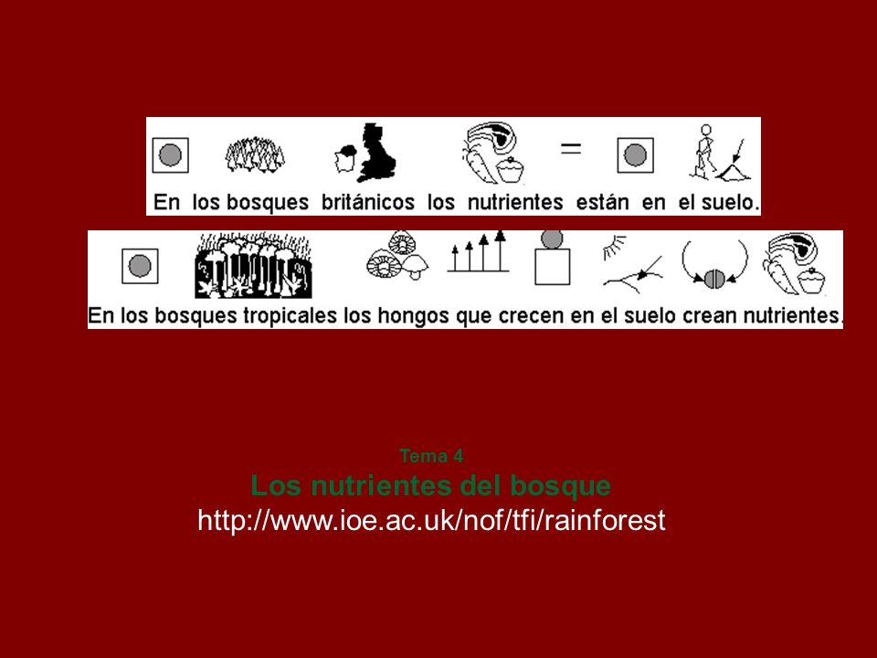 Tema 4 Los nutrientes del bosque http://www.ioe.ac.uk/nof/tfi/rainforest
