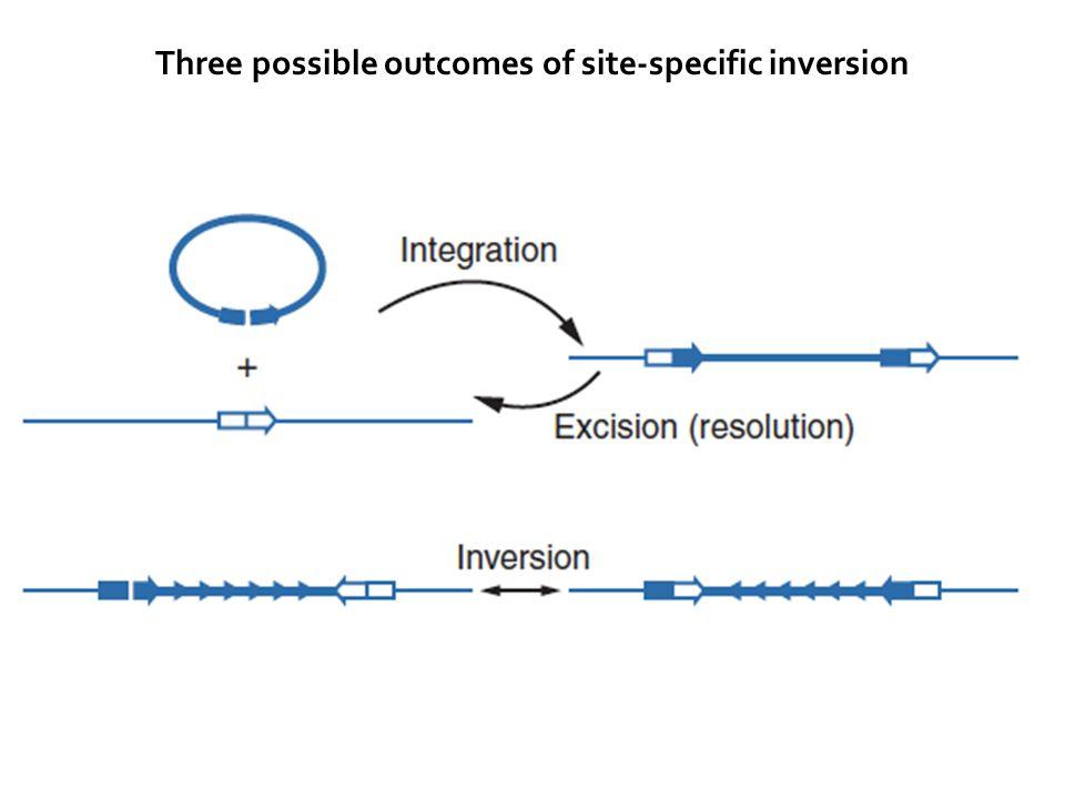 Three possible outcomes of site-specific inversion