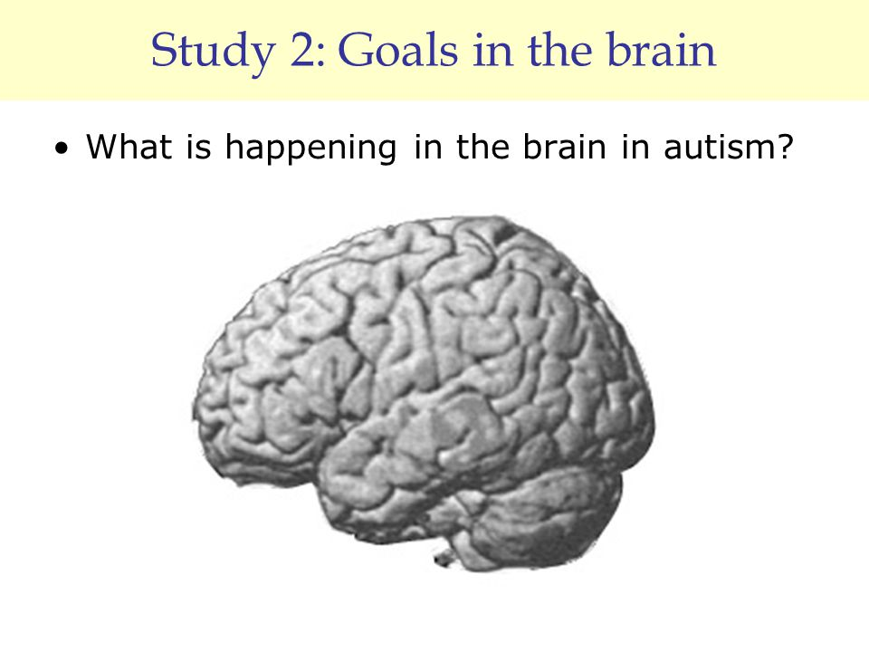 Study 2: Goals in the brain What is happening in the brain in autism