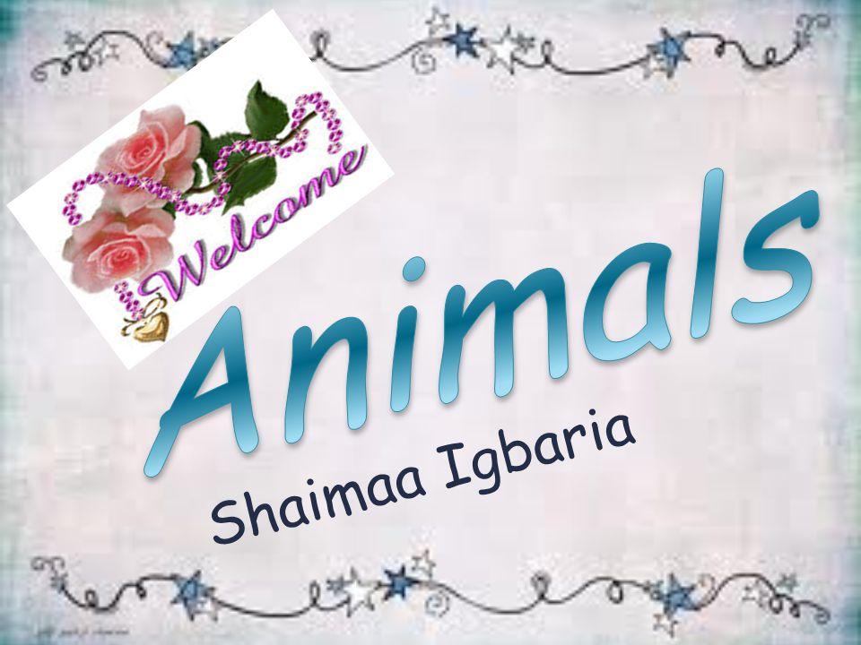 Shaimaa Igbaria