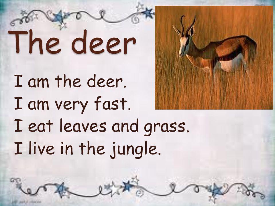 The fox I am the fox. I am clever. I eat meat. I live in the jungle.