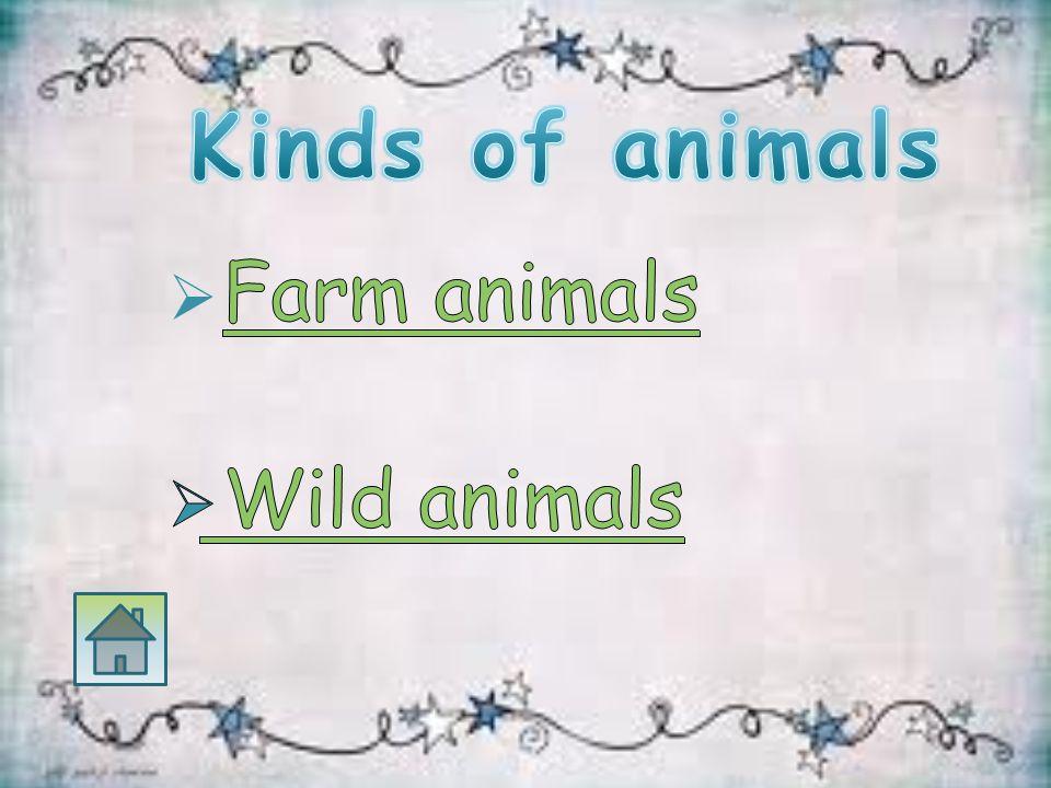  أن يتعرف الطالب على اسماء الحيوانات  أن يعرف الطالب صفات الحيوانات  أن يميز الطالب الحيوانات الأليفة والمفترسة