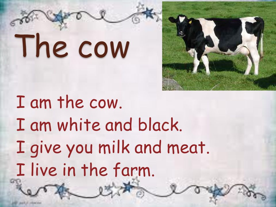 The cow I am the cow. I am white and black. I give you milk and meat. I live in the farm.