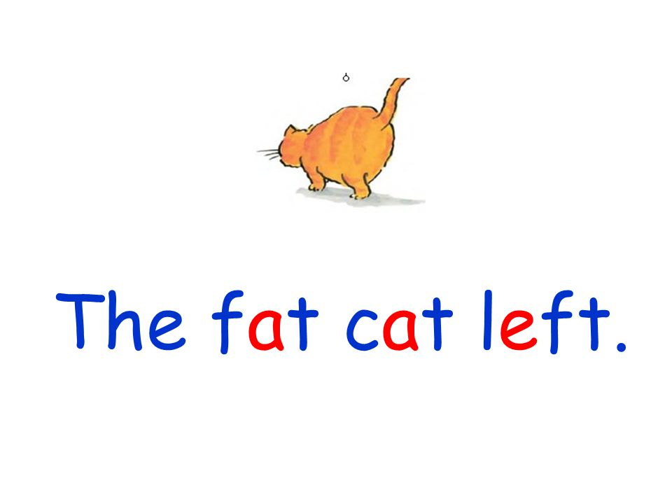 The fat cat left.