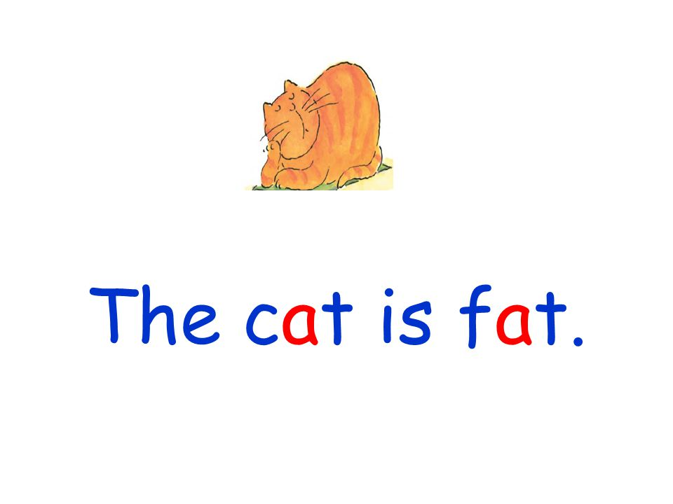 The cat is fat.