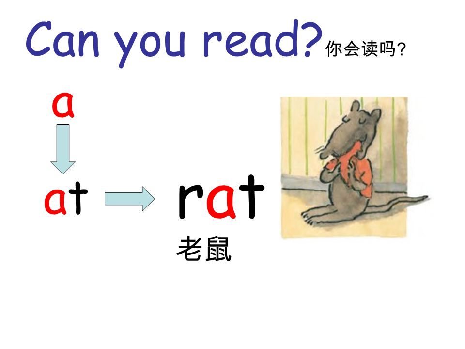 Can you read? 你会读吗 ? a atat rat 老鼠