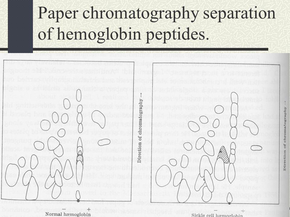Paper chromatography separation of hemoglobin peptides.