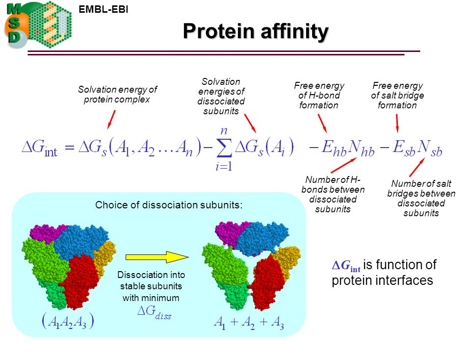 EMBL-EBI Protein affinity Solvation energy of protein complex Solvation energies of dissociated subunits Free energy of H-bond formation Number of H- bonds between dissociated subunits Free energy of salt bridge formation Number of salt bridges between dissociated subunits Dissociation into stable subunits with minimum Choice of dissociation subunits:  G int is function of protein interfaces
