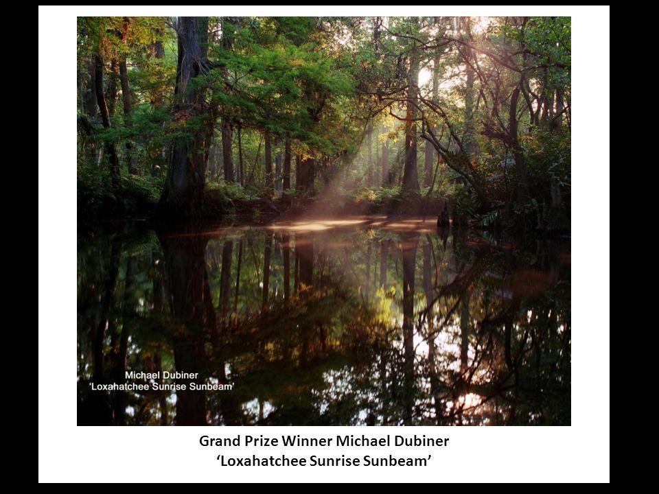 Grand Prize Winner Michael Dubiner 'Loxahatchee Sunrise Sunbeam'