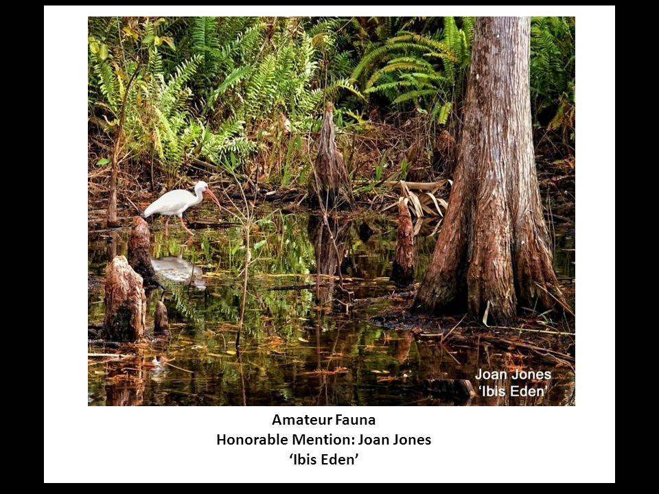Amateur Fauna Honorable Mention: Joan Jones 'Ibis Eden'